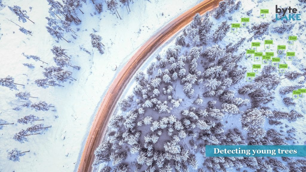 byteLake computer vision identifying young tree growth in a snowy landscape